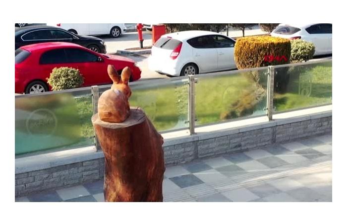 Ankara'daki kurumuş ağaçlar sanat eseri oluyor.