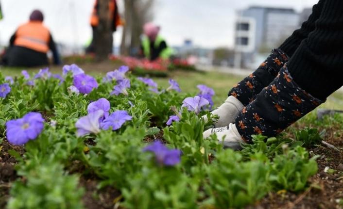 Ankara'nın yeşil alanları 24 milyon çiçekle buluşuyor