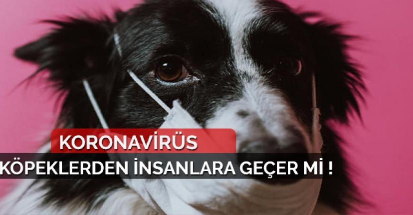 Corona Virüsü Köpekten İnsana Geçer mi