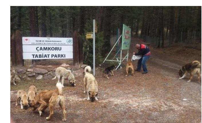 Ankara Büyükşehir Belediyesi'nden sokak hayvanlarına 461 ton mama