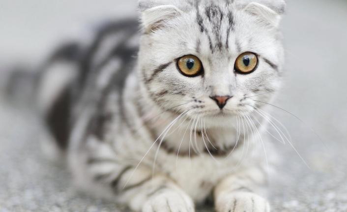 Kediler Seyahat Edebilir Mi?