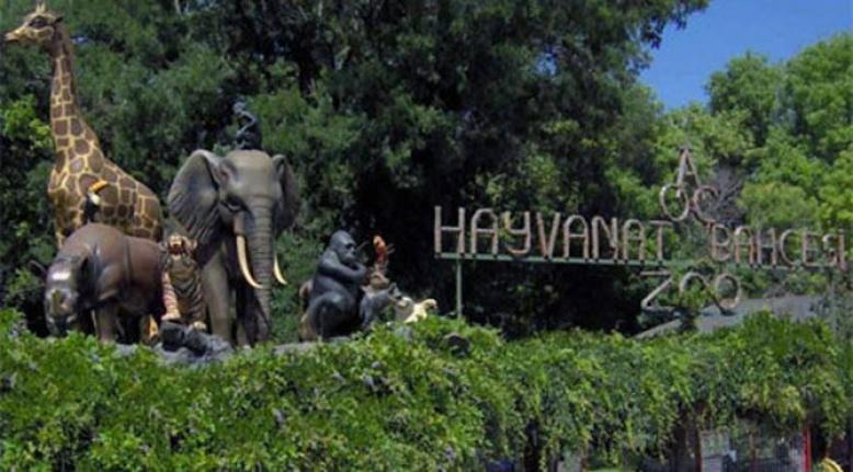 Ankara Hayvanat Bahçesi Nerede? Nasıl Gidilir?