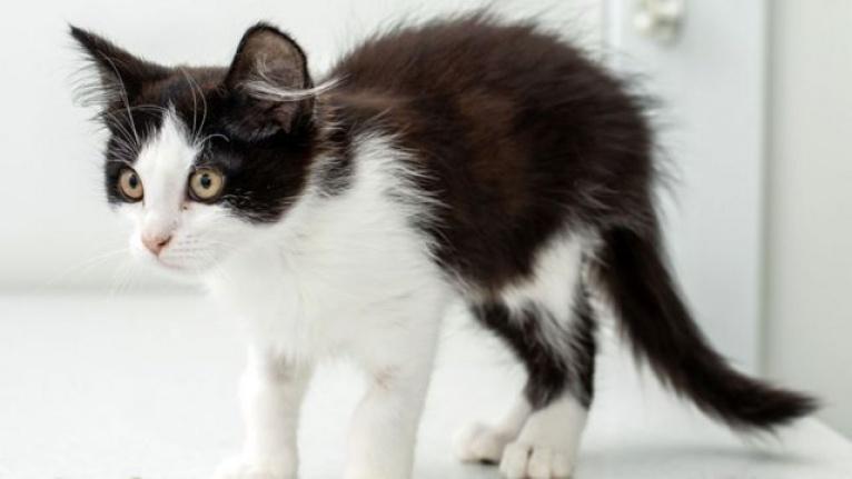 Kedi İshali Nasıl Geçer?
