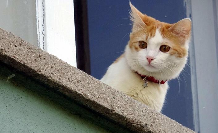 Kedi Piresi Eve Yayılır Mı?