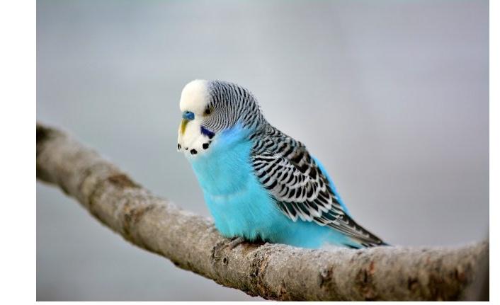 Rüyada muhabbet kuşu görmek ne anlama gelir?