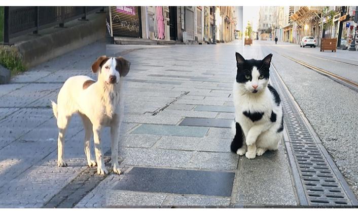 Evcil hayvan sahipleri sokağa çıkma yasağından muaf mı? Evcil hayvan sahipleri tam kapanmada dışarı çıkabilecek mi?