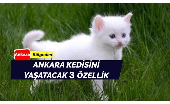 Ankara kedisi için öncelikler