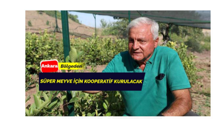 Süper meyve 'Aronya'