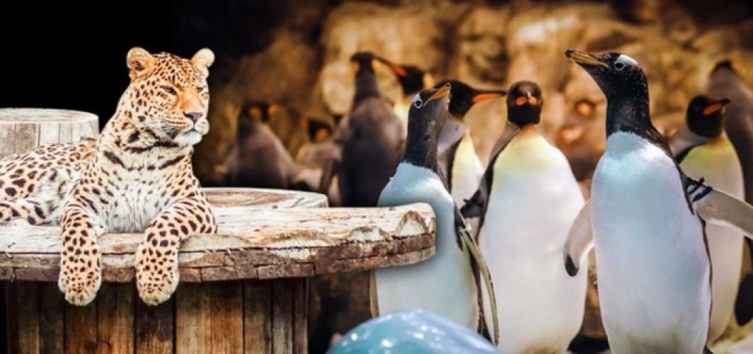 Çocuklara dijital hayvanat bahçesi