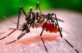 Bilim Kurulu Üyesi, Sivrisineklerin COVID-19 Bulaştırma İhtimaliyle İlgili Açıklama Yaptı
