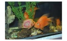 Okuldaki balık görenleri şaşırttı!