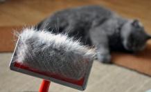 Kediler Ne Zaman Tüy Döker? Kedilerin Tüy Dökme Mevsimi