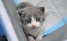 Kedi Pire Temizliği Nasıl Yapılır?