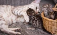 Dünya Kediler Günü nedir? Kediler günü ne zaman kutlanıyor?