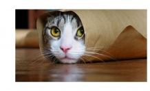 Kedilerde Mantar Hastalığı ve Tedavisi