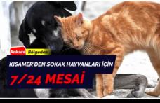 KISAMER'in Sokak Hayvanları İçin Mesai Saatleri 7/24