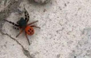 Ankara'da örümcek paniği