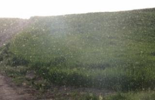 Yozgat'ta bir köy sinek istilasına uğradı....