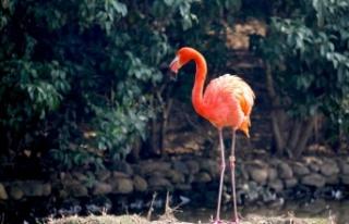 Ankara'daki Hayvanat Bahçeleri