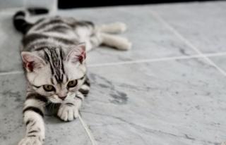 Kediler Kaç Gün Aç Kalır?