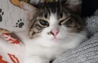 En Sevilen Dişi Kedi İsimleri ve Erkek Kedi İsimleri