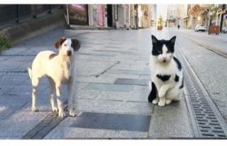 Evcil hayvan sahipleri sokağa çıkma yasağından...