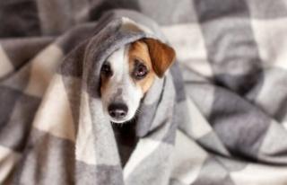 Yavru Köpekler Uyurken Neden Titrer?