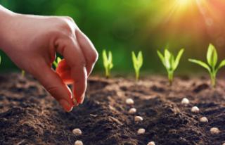 Verimli tarım için organik destek