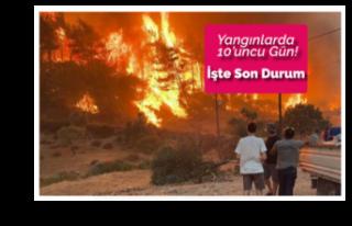 Yangınlar 10 Gündür Sönmüyor. İşte Son Durum