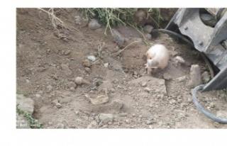 Ankara'da yol çalışmasında kafatası bulundu