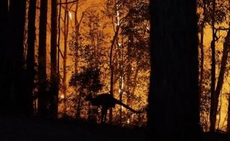 4 aydır söndürülemeyen yangın ve bilançosu!