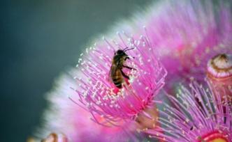 Hırvatistan'da ekolojik felaket: 50 milyon arı zehirlendi