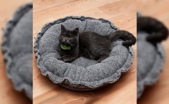 Kedi Yatağı Nasıl Olmalıdır?