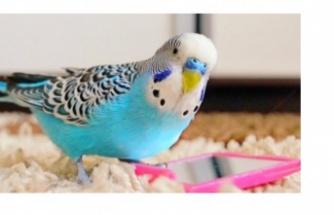Muhabbet kuşu bakımı nasıl yapılır? Muhabbet kuşu nasıl yıkanır?