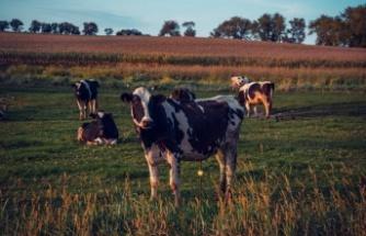 2 Yıl Geri Ödemesiz Hayvancılık Kredisi Hesaplama