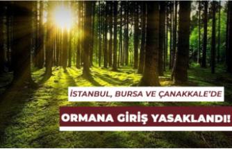 İstanbul, Bursa Ve Çanakkale İllerinde Ormana Girişler Yasaklandı