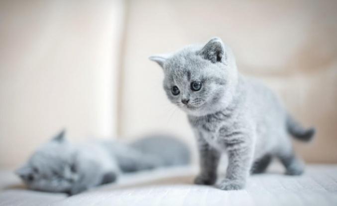 Yavru Kedilere Tuvalet Eğitimi Nasıl Verilir?
