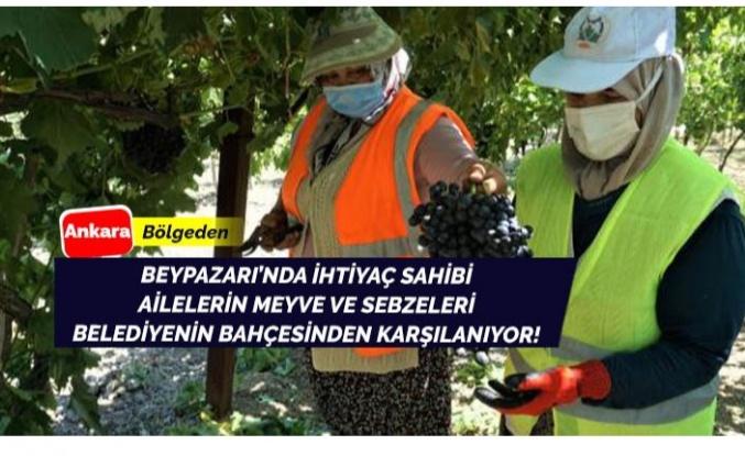 Beypazarı'nda ihtiyaç sahipleri için meyve sebzeler belediye bahçesinden