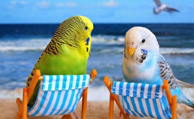 Yavru Muhabbet Kuşu Nasıl Beslenir?